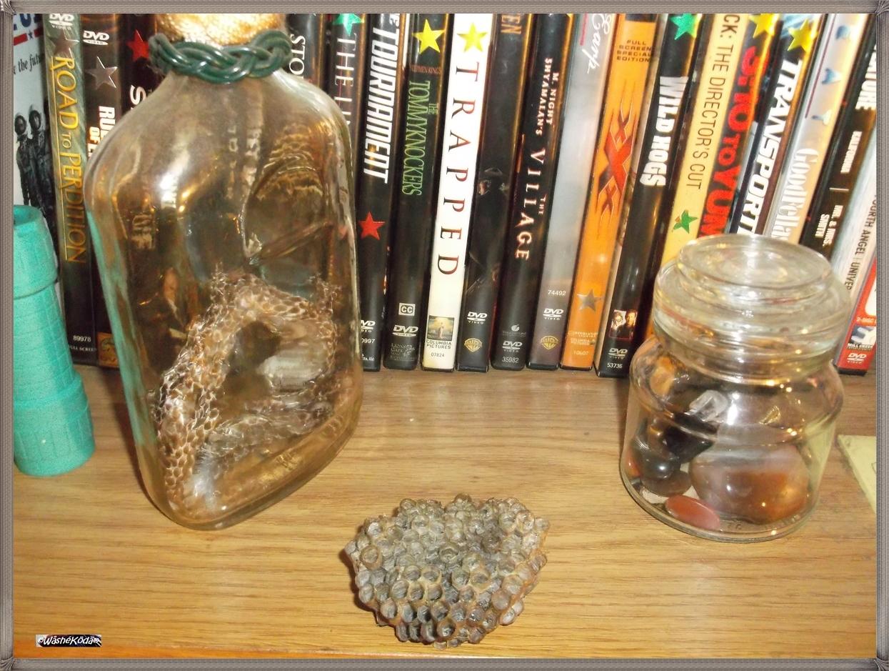 specimens bookshelf