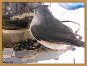 Birds_07