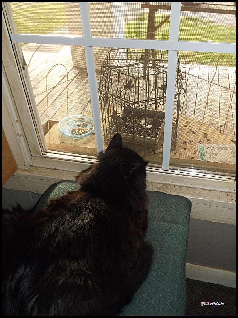 Bird Cage Feeder (2)