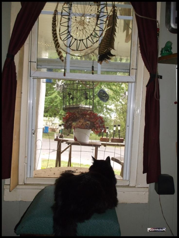 Bird Cage Feeder (3)