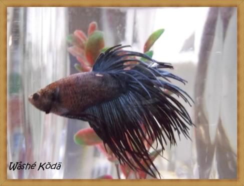 fish-a
