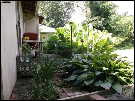 Garden 2jun17 (3)