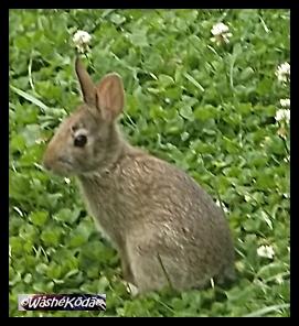 Bunny 002
