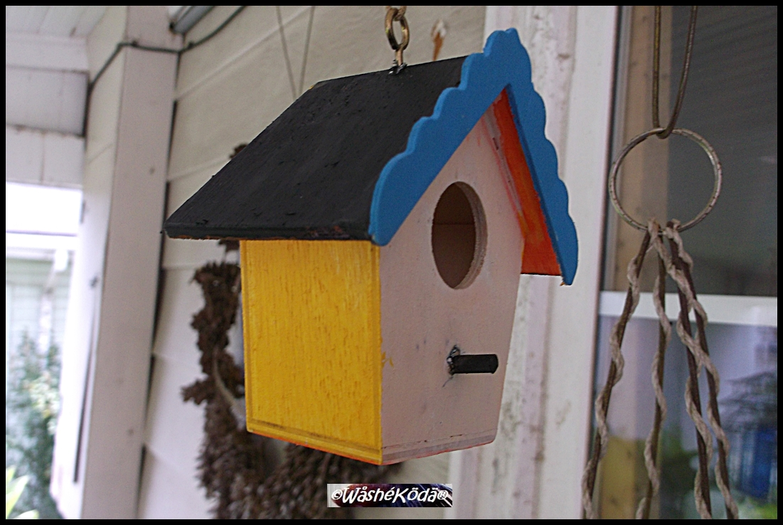 bird house 002