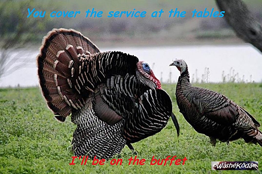 server turkeys