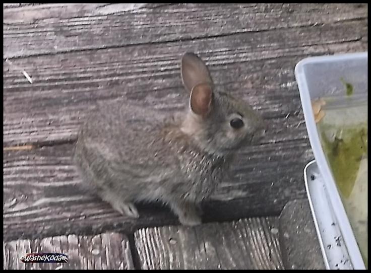 bunny apr 2020 2020-04-25 003-crop