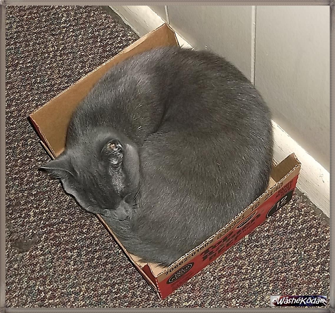 cats 2020-05-27 002