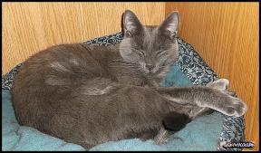 cats 2020-05-29 003