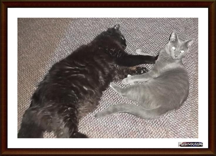 cats 2020-07-01 001-crop