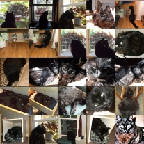 Cat gallery page #2