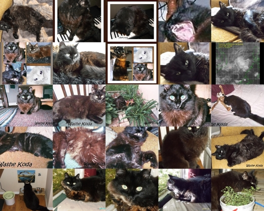 Cat gallery page #4